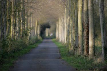 A way to walk on... by schaafflo