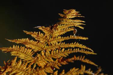 Golden autumn II ... by schaafflo