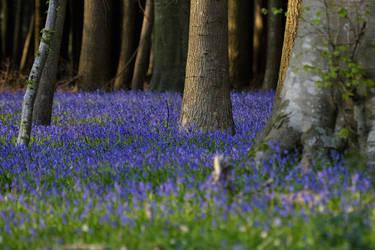 Blue carpet by schaafflo