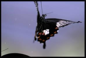 In flight II by schaafflo