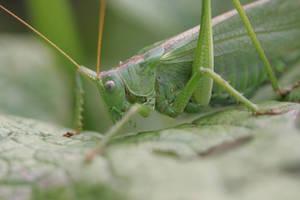 Jolly Jumper in the green by schaafflo