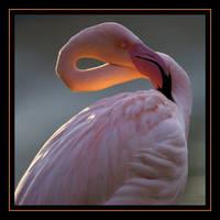 Pretty in pink by schaafflo