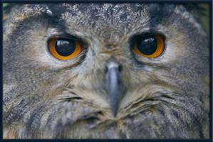 Nightowl by schaafflo