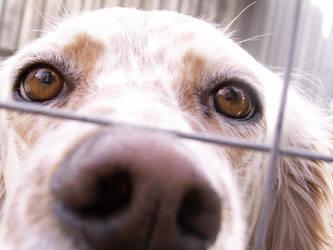 my dog by stesio54