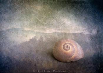 Shy Sea Shell by planet0