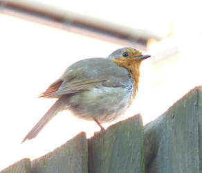 And The Robin Was Enlightened by MLT1