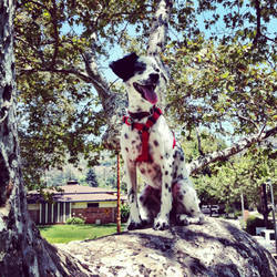adventure dog by spotted