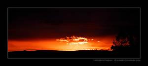 Tangerine Dream by anjules