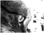 Cat-Eye by LadyElleth