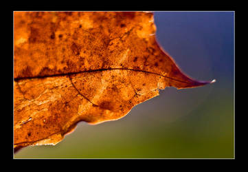 Leaf Details by can16358p