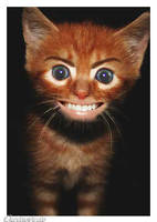 _ funny cat by puzzysche