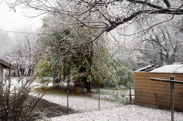 First Snow #1216 11/12/18 by KeithPurtell