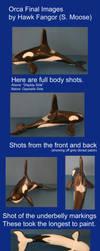 Orca Clay Sculpture by hawkfangor