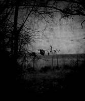 Spleen by landscapesofsorrow