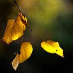Autumn again by phrozendesign