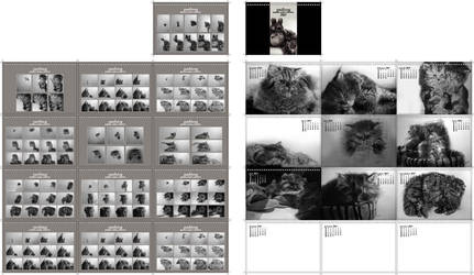 Cat calendar 2007 by paullung