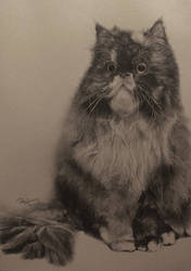 Cat Mimi by paullung