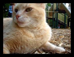 Park Cat 2 by hobbitgoddess