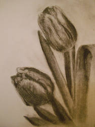 Tulips 01 by MystiqueX
