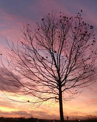 Sunrise by Nananie
