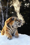 No Smoking by Sagittor
