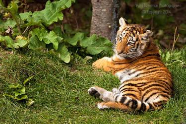 Kouma The Tigress III by Sagittor