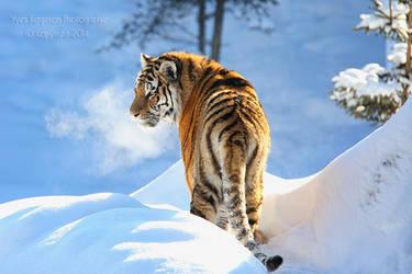 Blue Winter by Sagittor