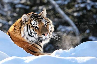 Wild Beauty by Sagittor