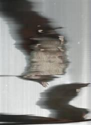 Glitch Art: Hedgehog by Momo36