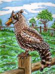 Duccoon Owl - Weird Animal by TCosbyJr