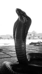 cobra (jemma el fnar) by h2j