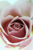 Just a Rose I by 1001G