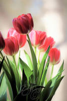 Tulips by 1001G