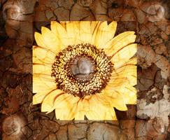 Flower-background by Buffelo