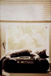 I'm so sleepy by CrazyMurdock1