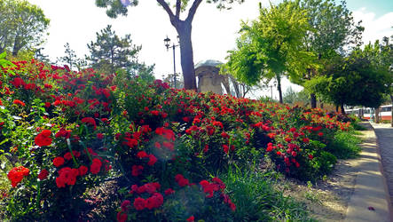 Adieu my lovely roses by Voodoostar