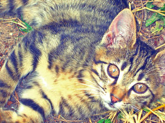 Cats eyes by Voodoostar