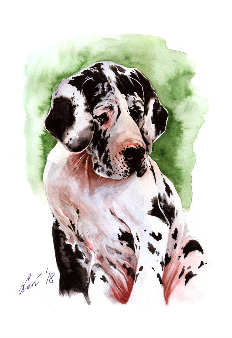 A Great Dane Puppy by lariel-istime