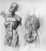 Anatomy Study by SalvadorTrakal