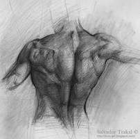Pencil Study 3 by SalvadorTrakal
