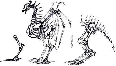 dragon sketch by Mocker-kun