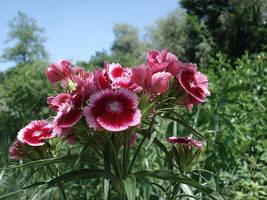 pink flowers by ToTac