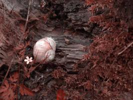 edible snail by ToTac