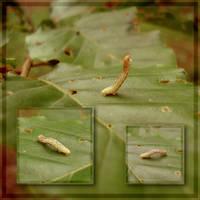 little caterpillar by ToTac
