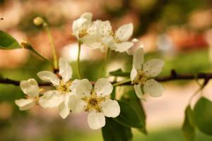 Spring in Poli 6 by spoii