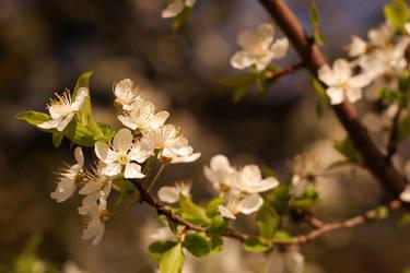 Blossom 8470 by spoii