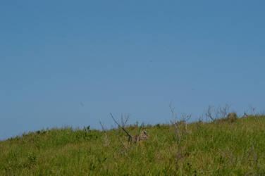 green grass hill by secret-luck-stock