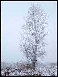 White Tree by Tindomiel-Heriroquen