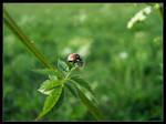 Ladybird by Tindomiel-Heriroquen