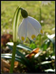 First Spring Flower by Tindomiel-Heriroquen